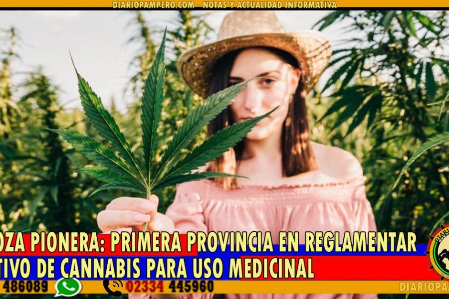 MENDOZA PIONERA: primera provincia en reglamentar el cultivo de cannabis para uso medicinal