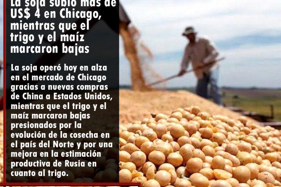 La soja subió más de US$ 4 en Chicago, mientras que el trigo y el maíz marcaron bajas